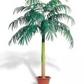 Coconut palm de groot
